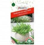 ENDYWIA Romanesca nasiona na cięte listki 0,2g Mini Ogród