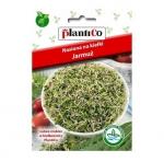 Nasiona na kiełki JARMUŻ - 5 g PLANTICO