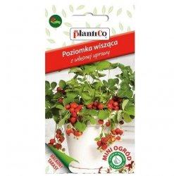 Poziomka rozłogowa zwisająca ATTILA nasiona 0,1g Plantico Mini Ogród