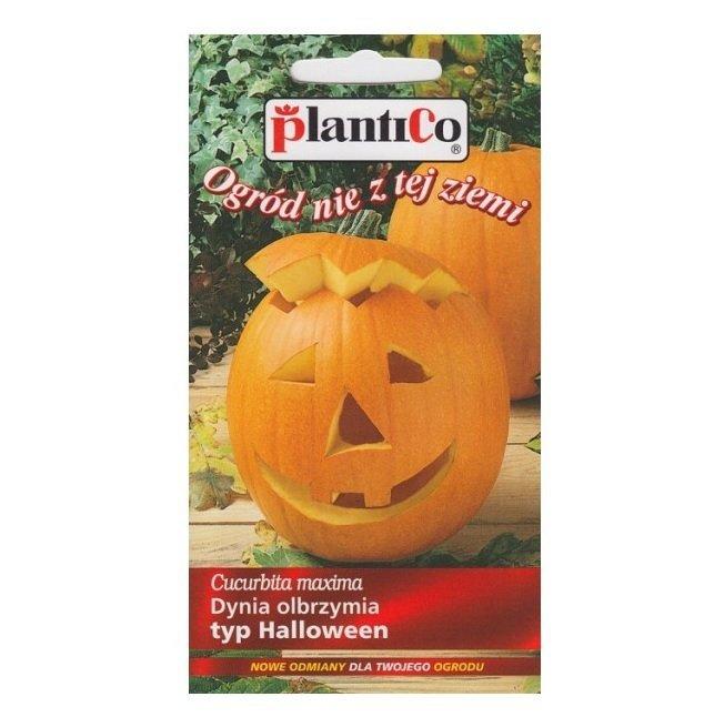 Dynia BIG MAX typ Halloween nasiona 2g PLANTICO