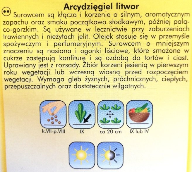 Arcydzięgiel litwor nasiona Plantico