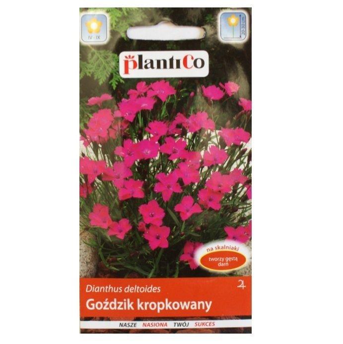 Goździk kropkowany nasiona Plantico