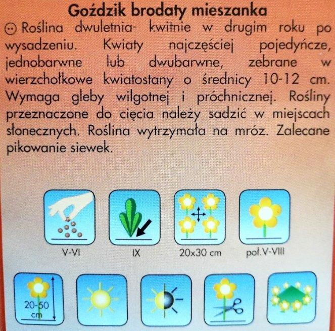 Goździk brodaty nasiona Plantico