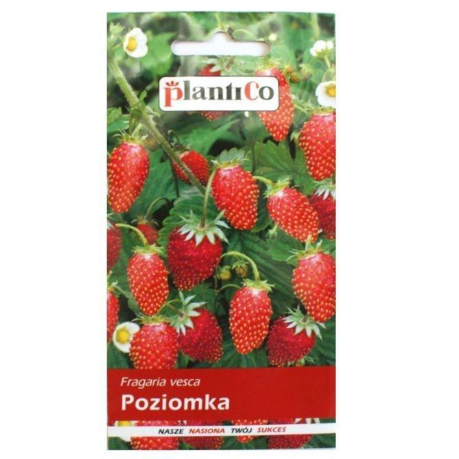 Poziomka nasiona Plantico