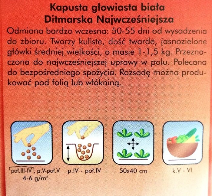 Kapusta Ditmarska nasiona Plantico