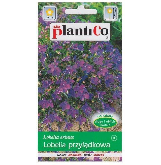 Lobelia fioletowa nasiona