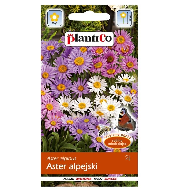 Aster alpejski nasiona Plantico
