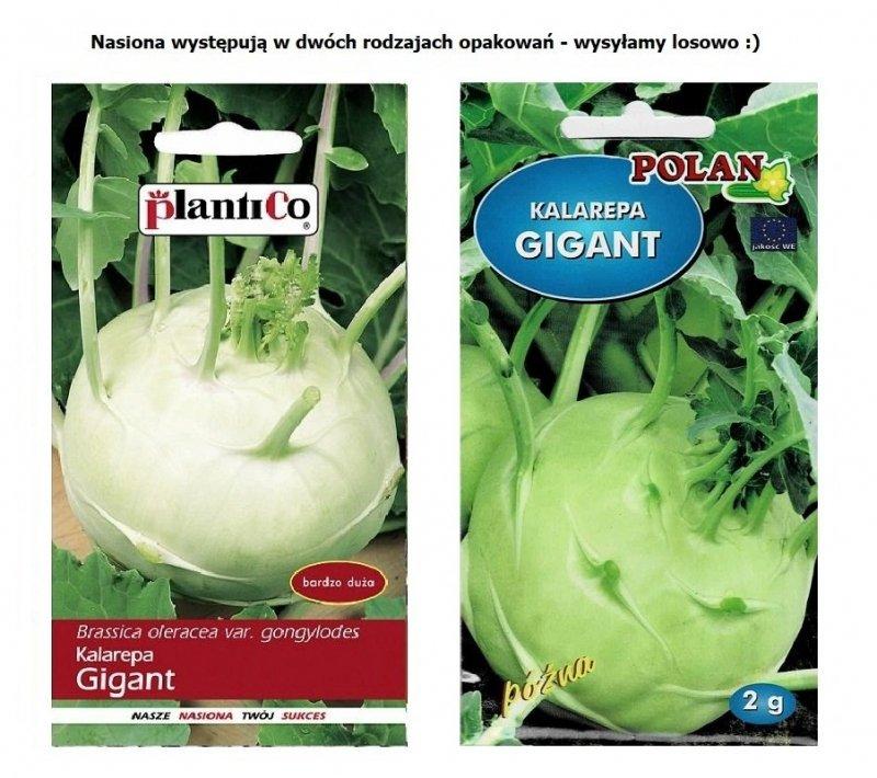 Kalarepa późna duża GIGANT nasiona warzyw 2g
