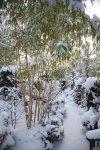 Sadzonki bambusów - największy wybór w Polsce