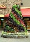 Roślina do kolorowych kompozycj