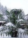 Bardzo wysoka palma