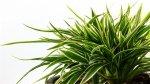 5 najlepszych roślin do biura !