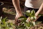 Glinka do sadzenia – czym jest i dlaczego warto ją stosować?