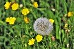 Pielęgnacja trawnika wczesną wiosną
