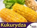 Kukurydza cukrowa Złota Karłowa (Zea mays ssp.saccharata) 20 g