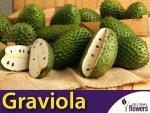 Graviola Guanabana (Annona muricata L.) nasiona