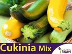 Cukinia mieszanka  (Cucurbita pepo) 2g