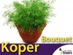 Koper ogrodowy Bouquet  (Anethum graveolens) XL 100g