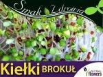 Nasiona na Kiełki - Brokuł 100g opakowanie XXL