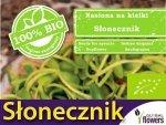 BIO Słonecznik - nasiona na kiełki 40g