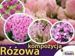 Kolorowy ogród Harmonia barw Kompozycja różowa CEBULKI