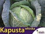 Kapusta włoska Vertus2 , śr. późna (Brassica oleracea con. capitata var. sabauda) 2g