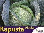 Kapusta włoska Vertus2 , śr. późna (Brassica oleracea con. capitata var. sabauda) XL 50g