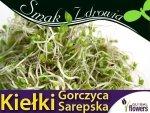 Nasiona na Kiełki - Gorczyca Sarepska  20g