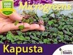 Microgreens - Kapusta głowiasta czerwona 4g