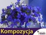 Kompozycja Niebieskich Roślin Jednorocznych 1 g nasiona