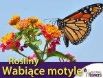Mieszanka roślin wabiących motyle Butterfly Garden 1g Nasiona