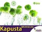 Kapusta brukselka Groninger (Brassica oleracea) XL 50g