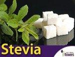 Stewia naturalny słodzik (Stevia rebaudiana)