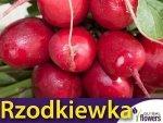 Rzodkiewka Cherry Belle (Raphanus sativus) L 10g