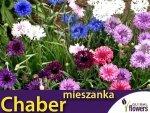Chaber bławatek, mieszanka (Centaurea cyanus) 1g