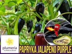 Papryka ostra JALAPENO Fioletowa (Capsicum annuum) nasiona