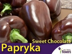 Papryka Słodka Sweet Chocolate (Capsicum annuum) 0,5g