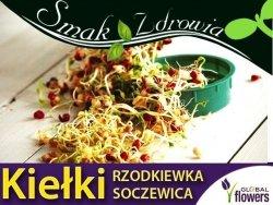 Nasiona na Kiełki - Rzodkiewka i Soczewica (Raphanus salivus, lens culinaris) 30g