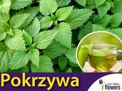 Pokrzywa zwyczajna (Urtica dioica) nasiona 0,1g
