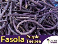 Fasola szparagowa karłowa fioletowostrąkowa Purple Teepee (Phaseolus vulgaris) 30+10g