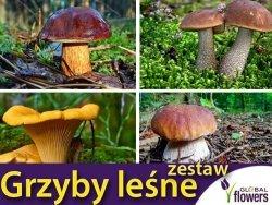 Zestaw Grzybni: Borowik Szlachetny, Kurka, Koźlarz, Podgrzybek 4x100g