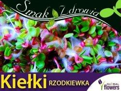 Nasiona na Kiełki - Rzodkiewka (Raphanus salivus) nasiona 20g