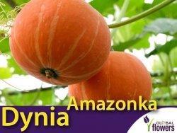 Dynia olbrzymia Amazonka (Cucurbita maxima) XXL 500g