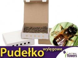 Pudełko wylęgowe dla pszczoły murarki - DUŻE