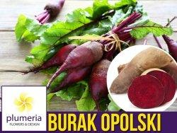 Burak ćwikłowy OPOLSKI (Beta vulgaris var.conditiva) nasiona 10g