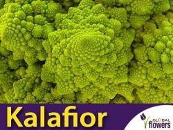 Kalafior Romanesco natalino Zielony (Brassica oleracea convar.) 1g