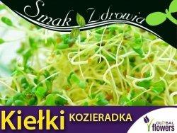 Nasiona na Kiełki - Kozieradka - (Trigonella foenum-graecum) nasiona 20g