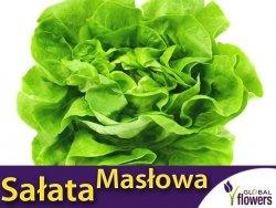 Sałata głowiasta masłowa Justyna Wczesna (Lactuca sativa) 1g