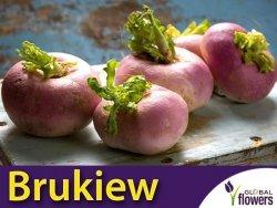 Brukiew (Brassica napus var. napobrassica), 10 g, nasiona