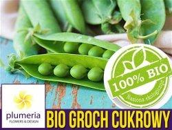 BIO Groch cukrowy NORLI nasiona ekologiczne 15g